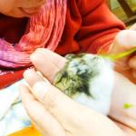 動物セラピー4